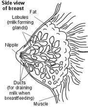 infeksi saluran Payudara