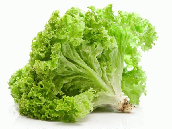 awet muda dengan daun selada