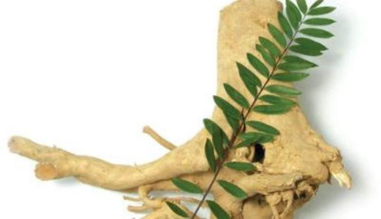 manfaat tanaman herbal pasak bumi