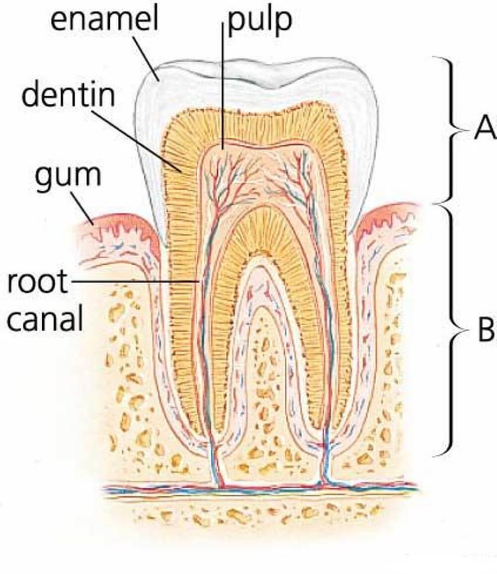 Cara Mencegah Sakit Gigi Saat Hamil