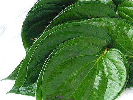 daun sirih untuk kewanitaan