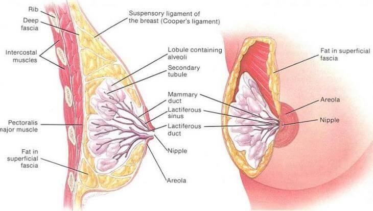 kehamilan kurangi resiko kanker payudara